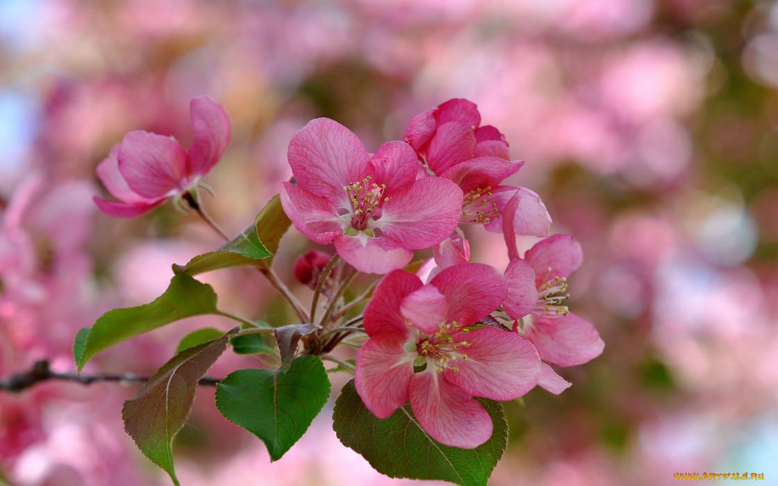 цветы, цветущие деревья ,  кустарники, весна